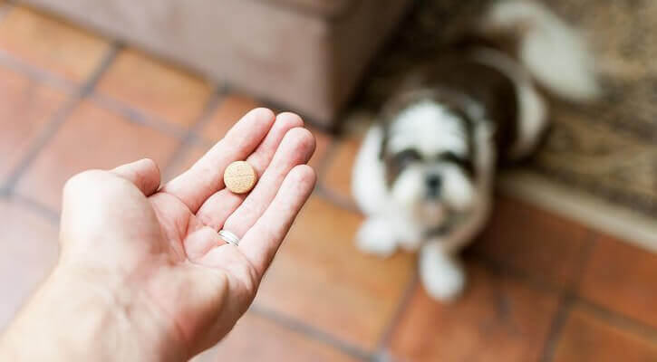 Heartworm Prevention and Treatment